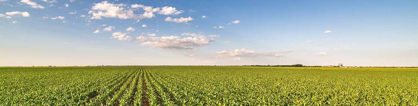corn-1388x900-emergence-field-sun-growth-503570-edited