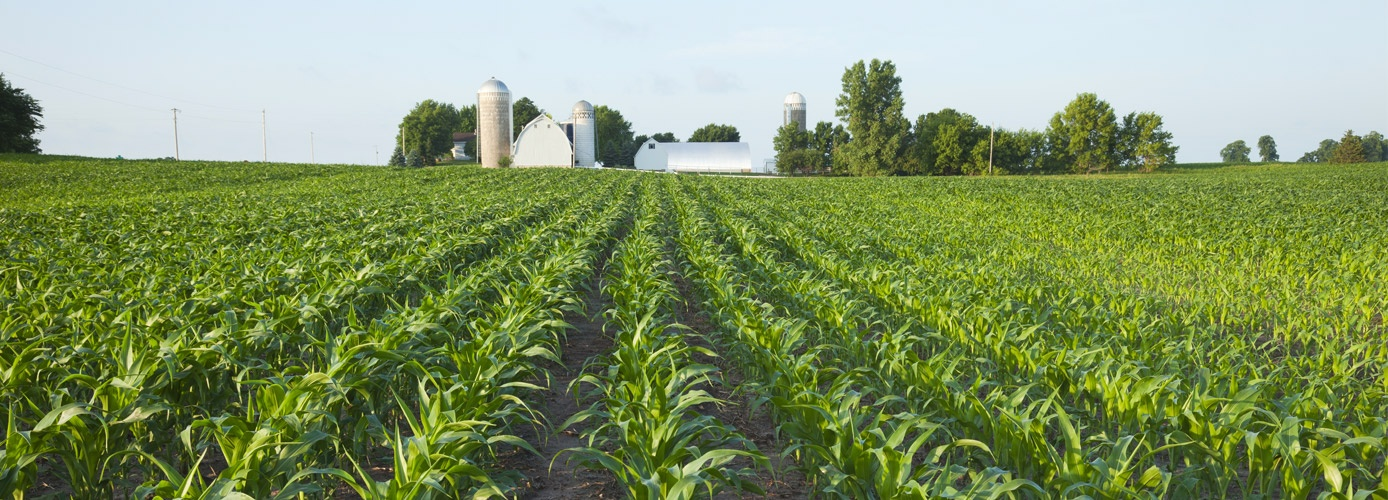 How Fungicides Work