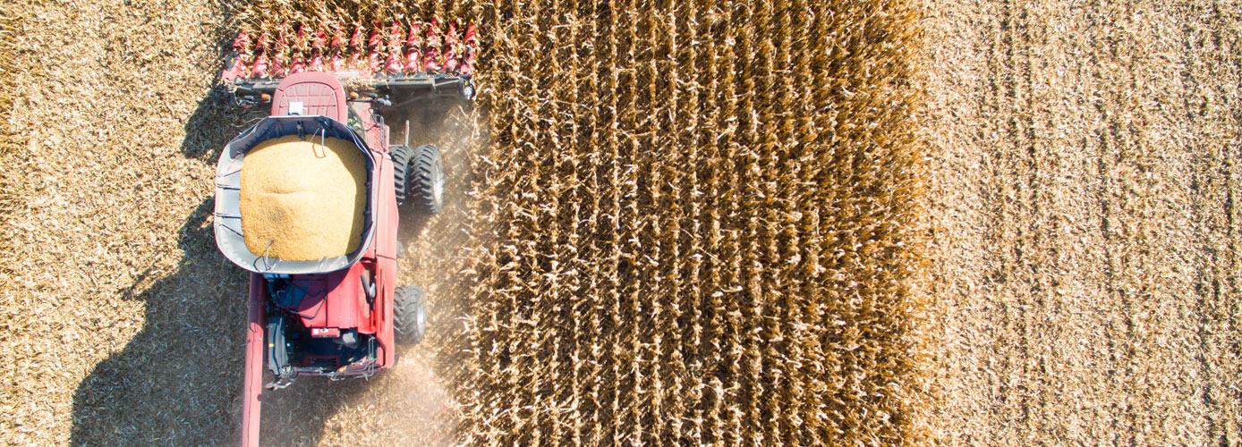 harvest-emergence-banner